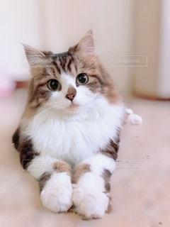 白い表面に座っている猫の写真・画像素材[2714473]