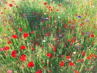 カラフルなお花の写真・画像素材[2654775]