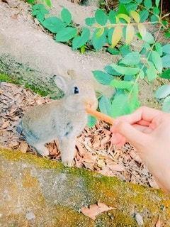 ウサギの写真・画像素材[2677007]
