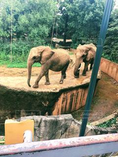 象の行進の写真・画像素材[2660369]