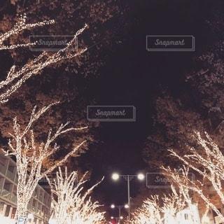 表参道イルミネーション🌃の写真・画像素材[2647679]