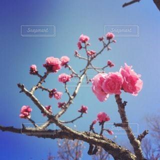花の写真・画像素材[102329]