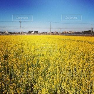 花の写真・画像素材[102331]