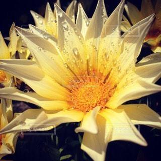 花の写真・画像素材[102333]