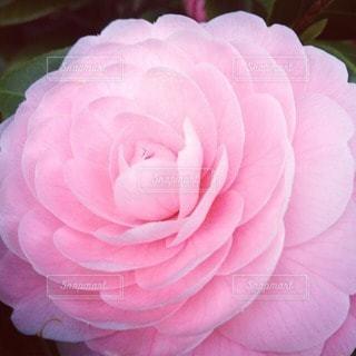 花の写真・画像素材[102335]