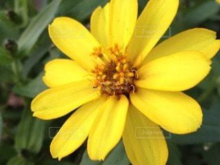花の写真・画像素材[110306]