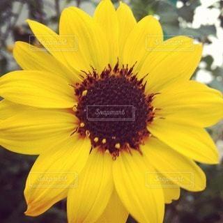 花の写真・画像素材[110308]
