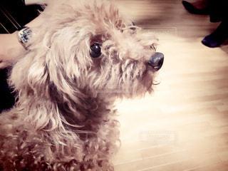 犬の写真・画像素材[123070]