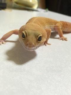 爬虫類の写真・画像素材[102444]