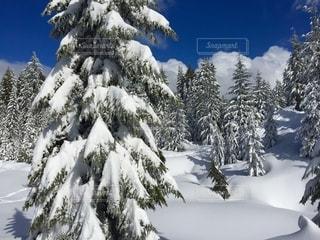 雪景色の写真・画像素材[2649279]