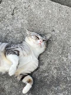 地面に横たわっている猫の写真・画像素材[2703356]