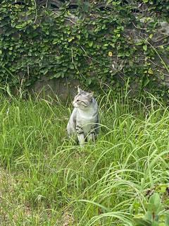 芝生に覆われた畑の上に座っている猫の写真・画像素材[2703358]