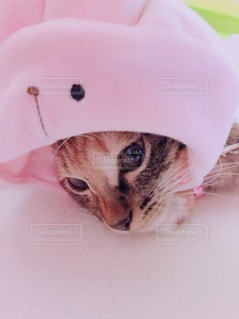 うさぎの帽子を被る子猫の写真・画像素材[2649462]