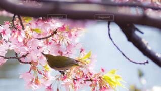 春 - No.381230