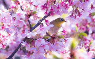 春 - No.381234