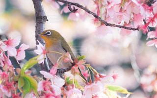 春 - No.381235