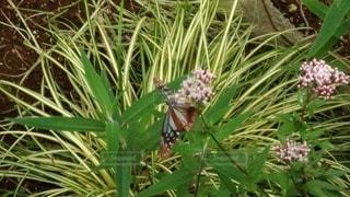 昆虫の写真・画像素材[2666791]