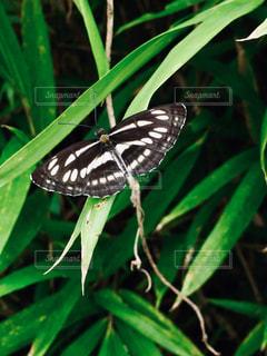 蝶々っ♪の写真・画像素材[2666270]