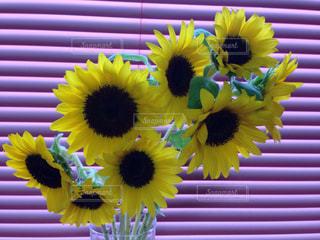 花の写真・画像素材[151004]