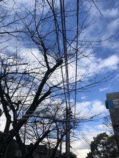 高い木の眺めの写真・画像素材[2125677]