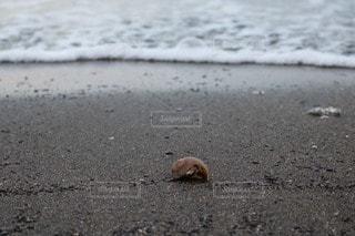 海の写真・画像素材[14820]