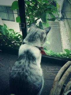 猫の写真・画像素材[104998]