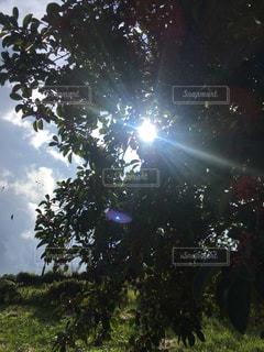 秋の日の写真・画像素材[2659467]