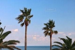 ヤシの木のある公園の写真・画像素材[2716428]