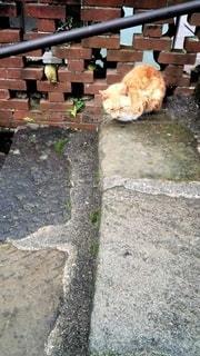 茶白猫の写真・画像素材[2672754]