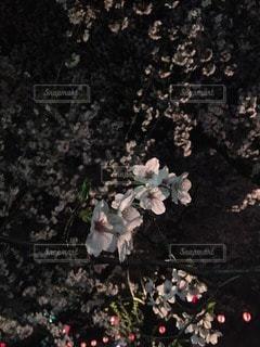 自然の写真・画像素材[102974]