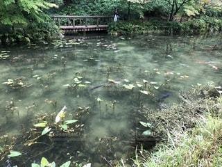 モネの池の写真・画像素材[2661810]