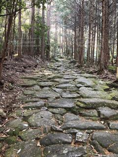 熊野古道 馬越峠の石畳の写真・画像素材[2661815]