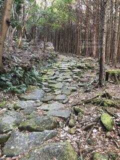 熊野古道 馬越峠の石畳の写真・画像素材[2661817]