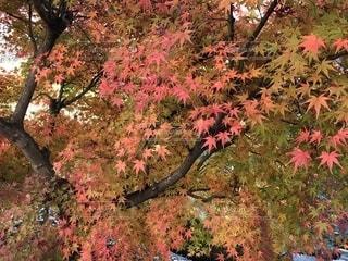 秋の風景の写真・画像素材[2792361]