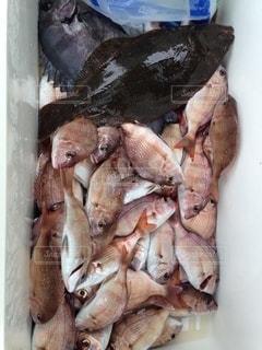 海の恵みが大漁の写真・画像素材[2792472]