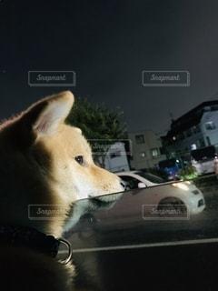 柴犬の日常の写真・画像素材[2662963]