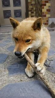 犬の写真・画像素材[2669701]