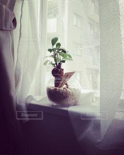 植物の写真・画像素材[2664454]