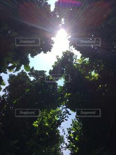 木漏れ日の写真・画像素材[2664045]