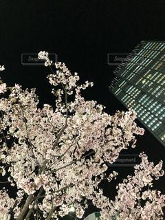 花をクローズアップするの写真・画像素材[2682599]