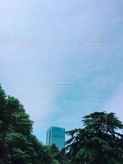 自然の写真・画像素材[122356]