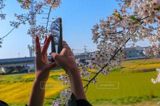花の写真・画像素材[2669341]