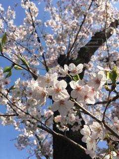 花の写真・画像素材[103112]