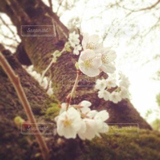 自然の写真・画像素材[103113]