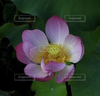 花のクローズアップの写真・画像素材[3373402]