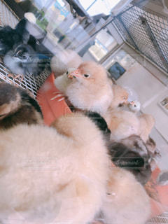 動物の写真・画像素材[2670947]