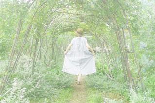 森の女の子の写真・画像素材[3347589]