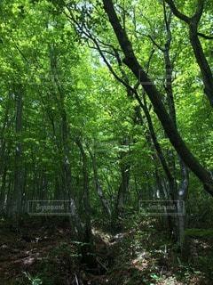 自然の写真・画像素材[104261]