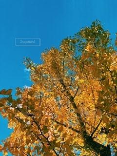 空の写真・画像素材[2672207]