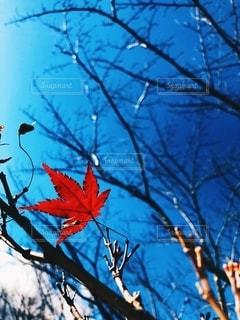 自然の写真・画像素材[2672209]